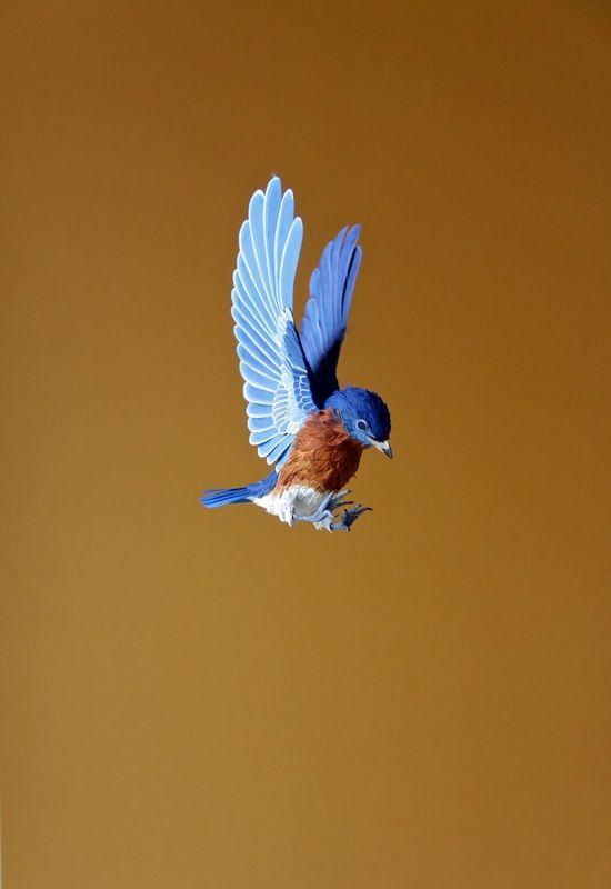 Beautifully detailed paper birds by Diana Beltran Herrera @_ppiinnee_