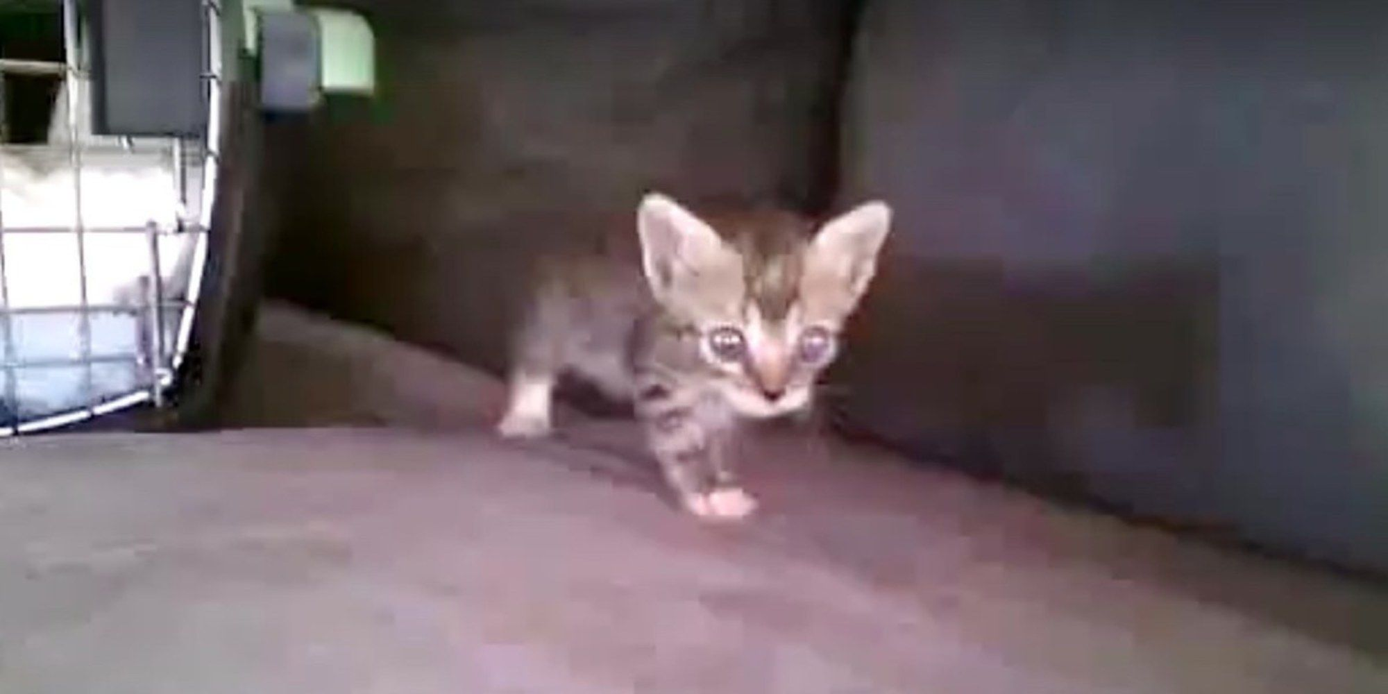 A Man Saved A Tiny Kitten From Drowning In A Sewer While Others Decided To Walk Away He Rushed The Kitten To G Animal Rescue Stories Kitten Cute Animal Photos