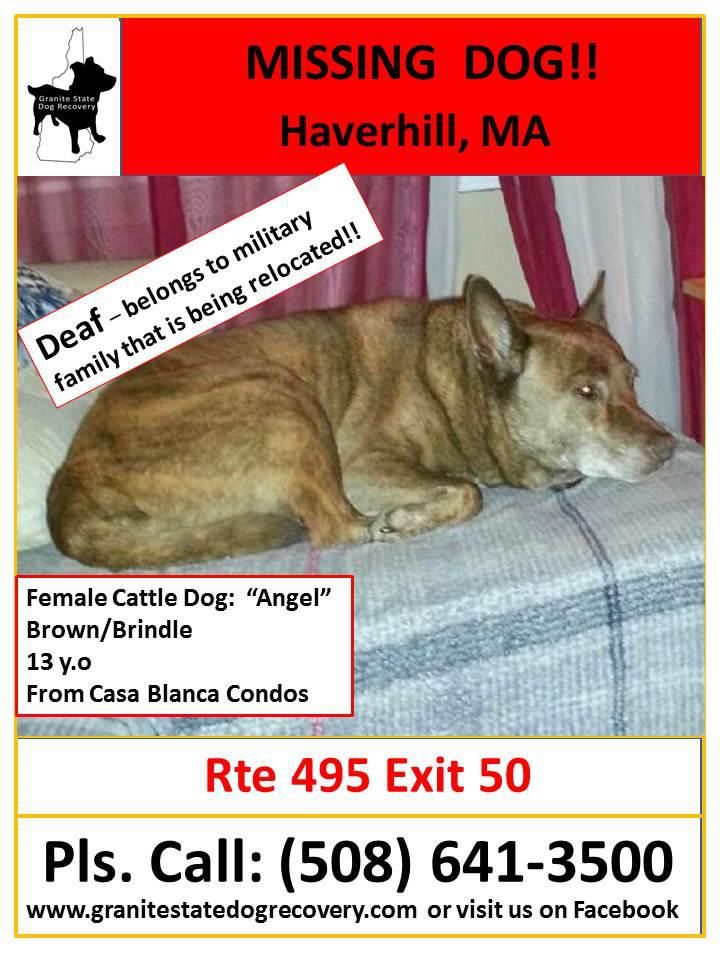 Deaf Dog Lost Dog Missing Dog Female Cattle Dog Haverhill Mass 508 641 3500 With Images Losing A Dog Losing A Pet Pet Dogs Puppies
