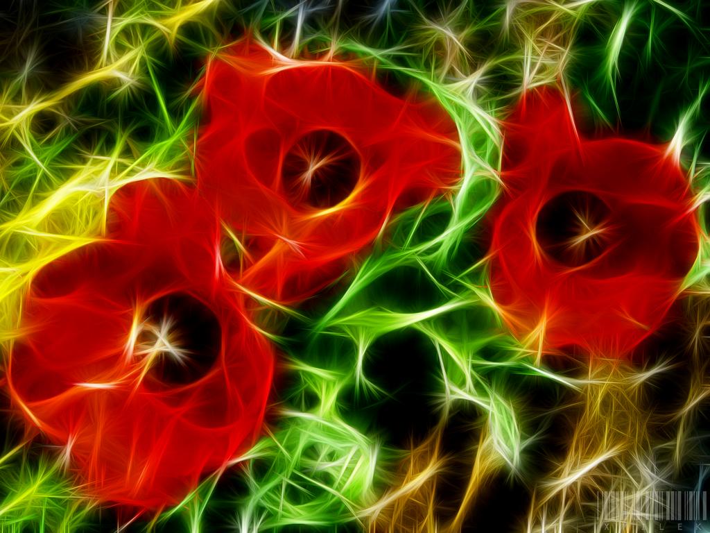 Three Red Blossoms by xmilek.deviantart.com on @deviantART