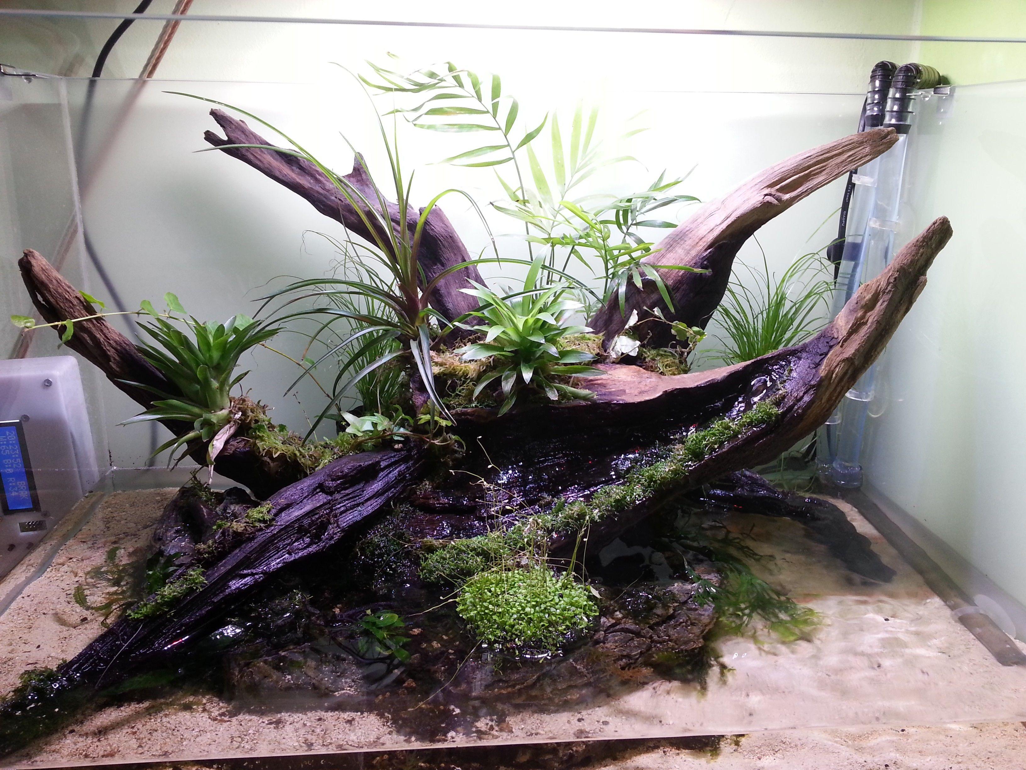 c513a6fcdb9ba9a7d7b26da3717c5540 Frais De Aquarium Osaka Concept