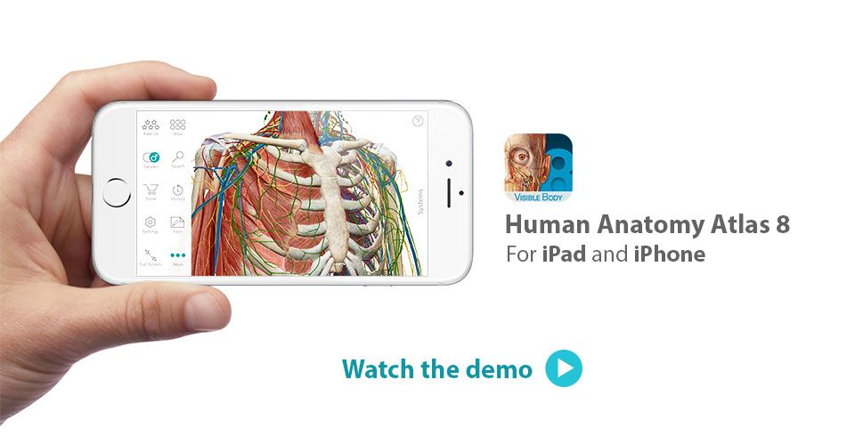 Visible Body Human Human Anatomy Atlas 8 For Ios Sassafrass