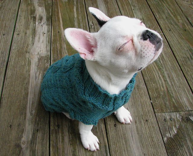 "Ravelry: 102-43 Knitted dogcoat in ""Karisma"" with cable pattern ..."