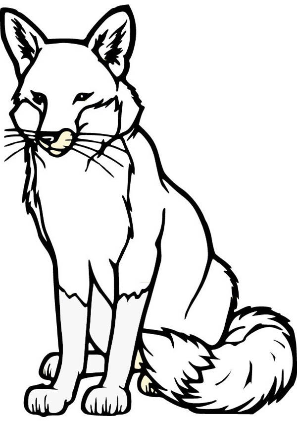Alpha Male Fox Coloring Pages Bulk Color Fox Coloring Page Horse Coloring Pages Drawing Kits