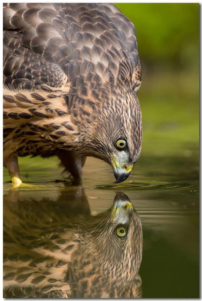 foto George Simone Sweijen Spiegeltje spiegeltje aan de wand.....wie is het mooiste van het land? Zaterdag 15 juli oost Brabant.