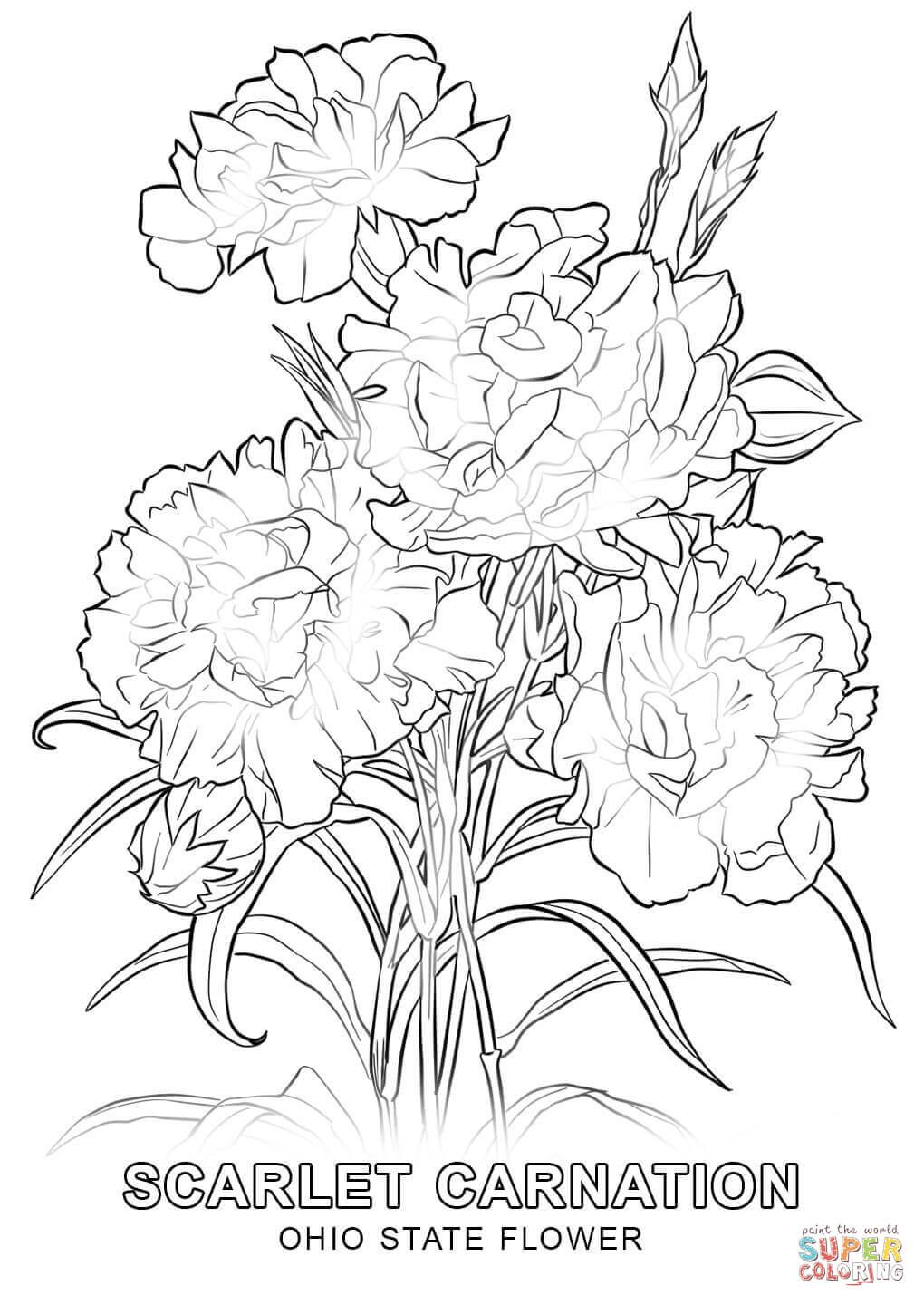 Ohio State Flower Coloring Page Jpg 1020 1440 Flower Coloring