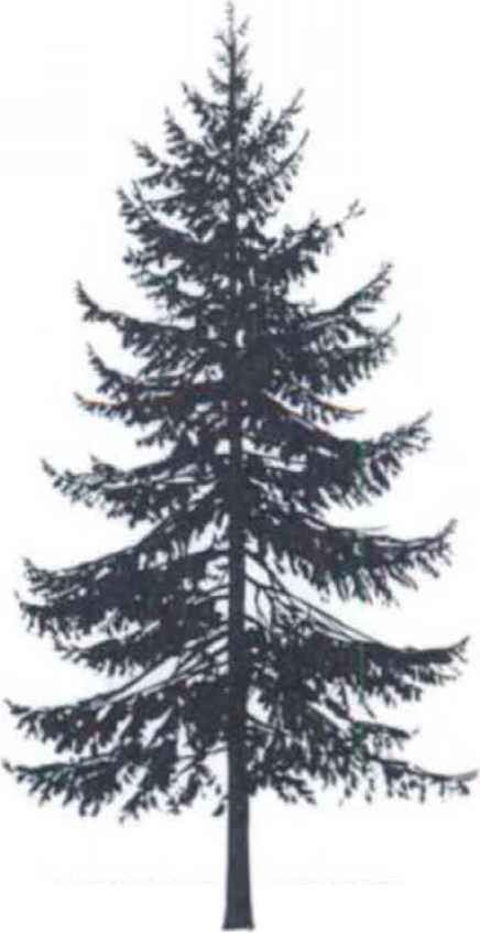 Christmas Tree Tattoo Designs.Spruce Silhouette Trees Pine