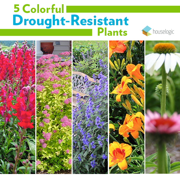 What you should and shouldn't plant in your yard. Drought resistant and thirsty!