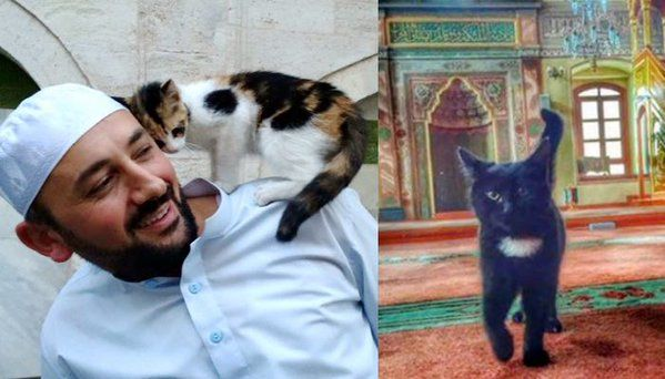 """Love Meow on Twitter: """"A man opens the mosque's doors for stray cats to give them shelter & keep them warm. Story: https://t.co/NCTVvyv8kh https://t.co/lojuoKkdrP"""""""