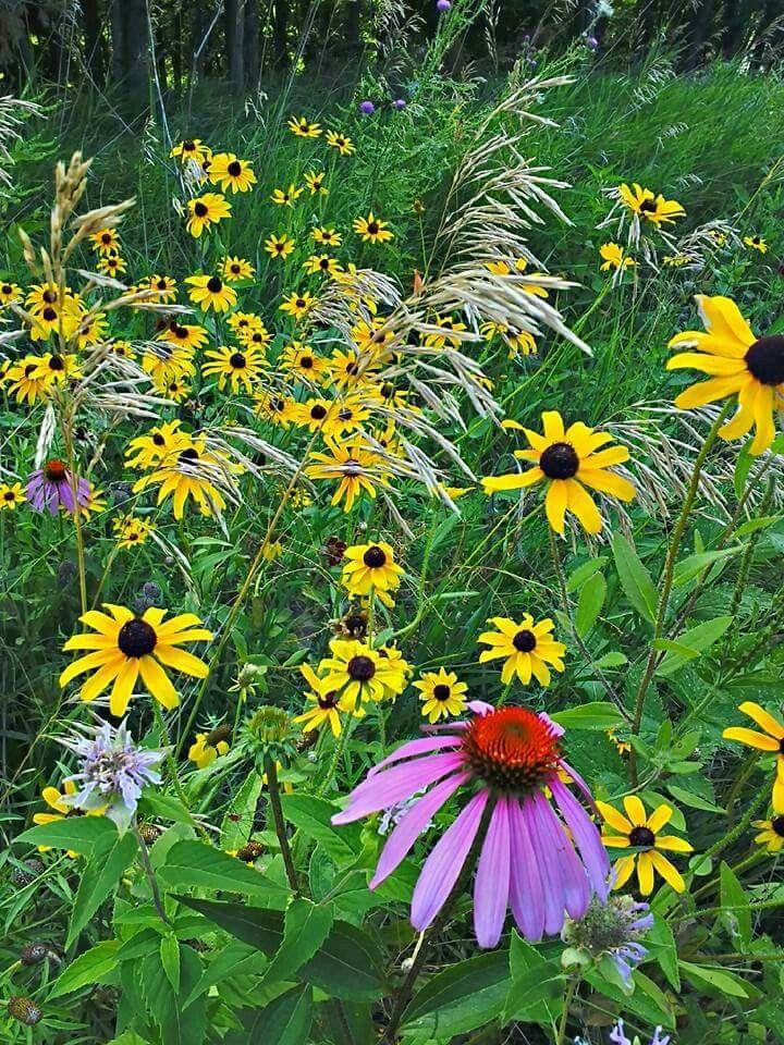 Kansas wildflowers wild flowers wildflower tattoo kansas