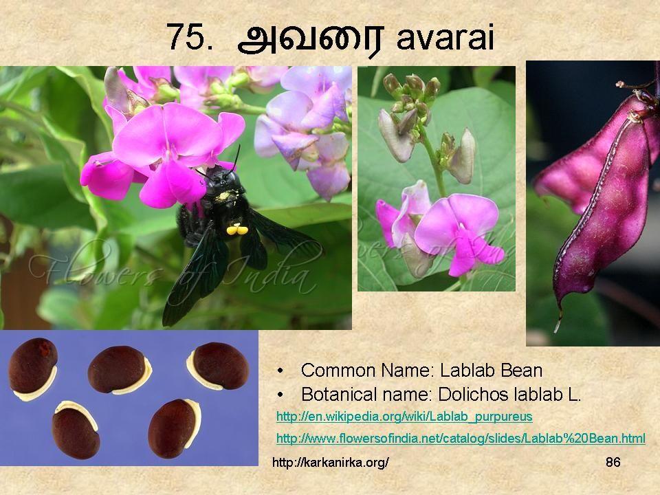 Slide86 in 2020 Flower names, Flowers, Botanist