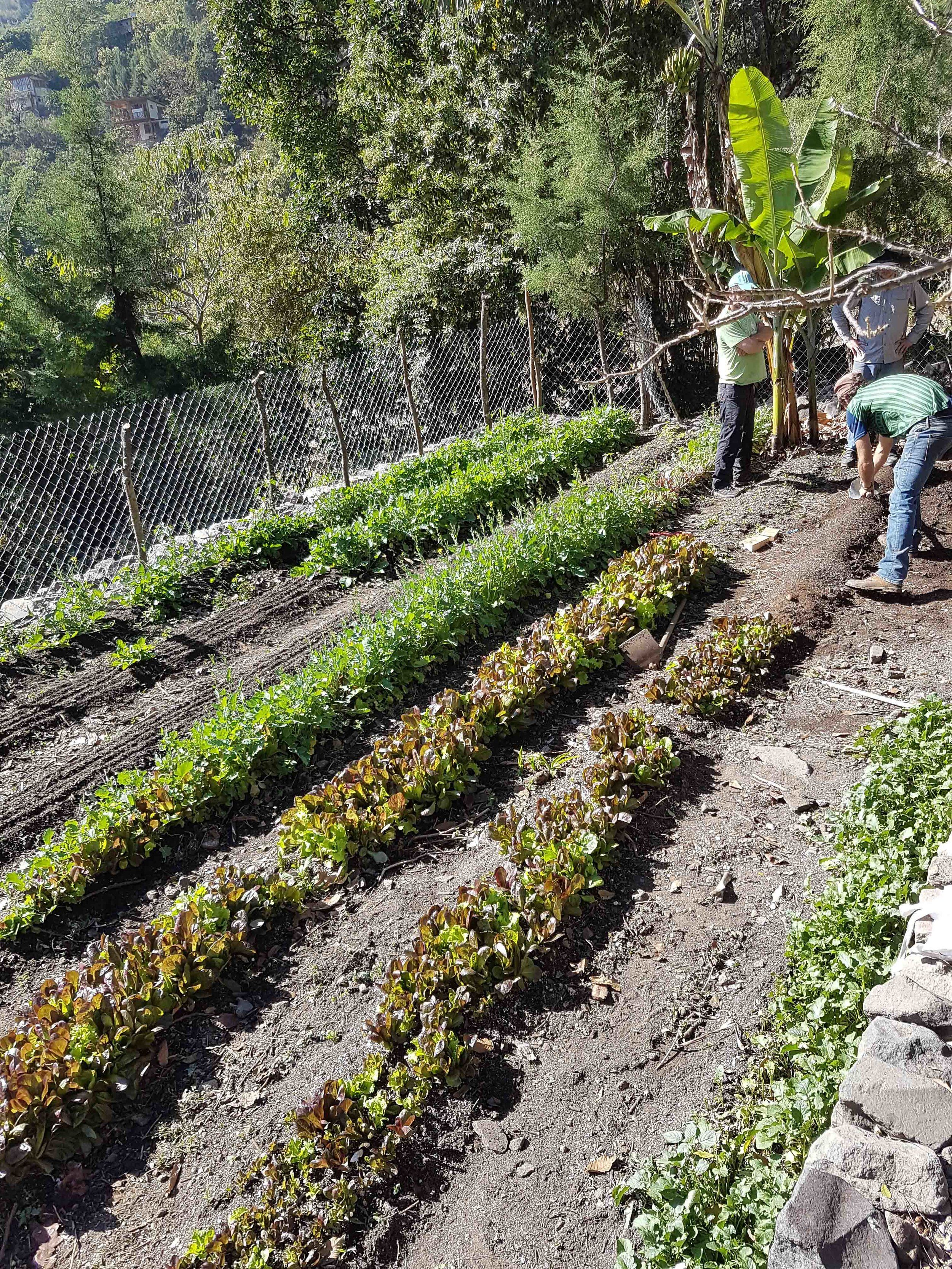 Zone Mapping and the 5 Integral Components of a ... on Backyard Permaculture Design id=73432