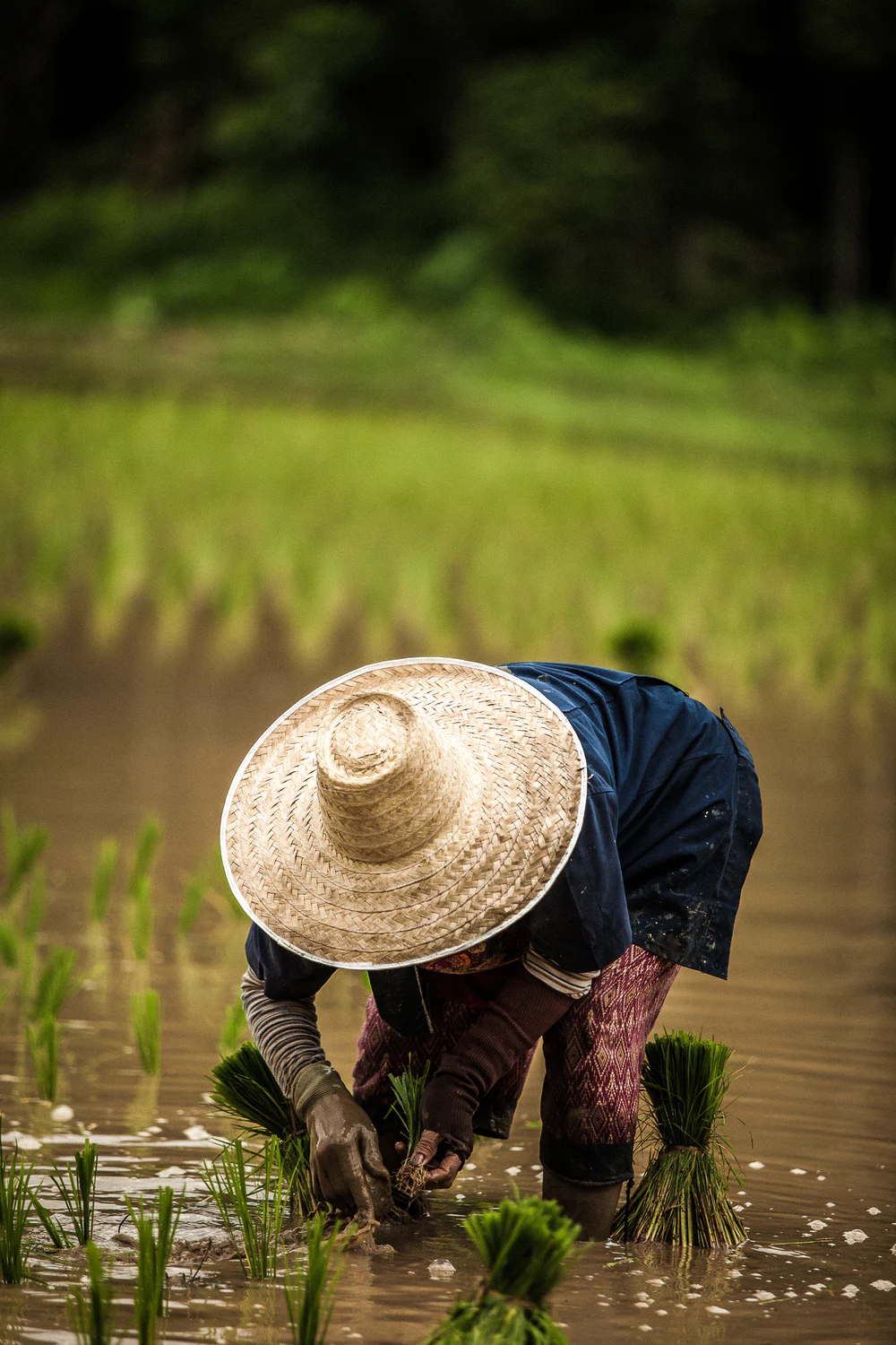 500 Thailand Pictures Hd Download Free Images On Unsplash Farmer Thailand Pictures Silhouette Photos