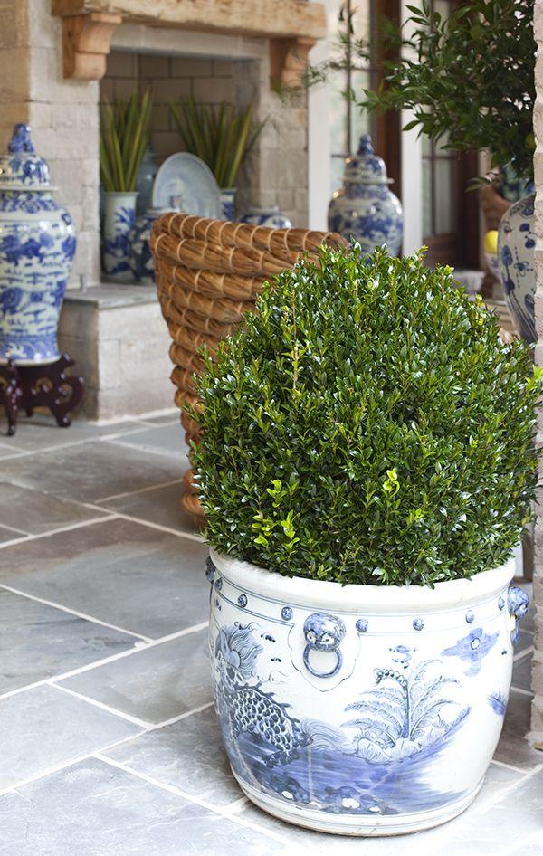BOXWOODS & blue and white  Veranda design by Parker Kennedy Living