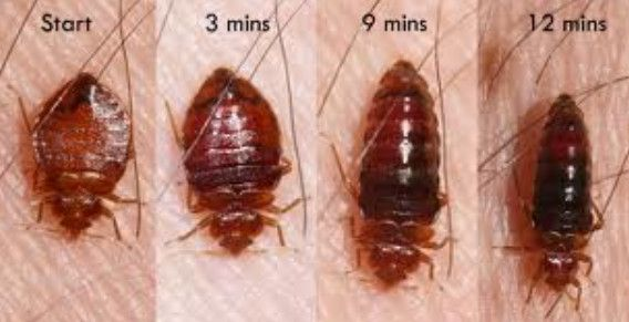 There Are Many Pests That Homeowners May Decide To Try And Control