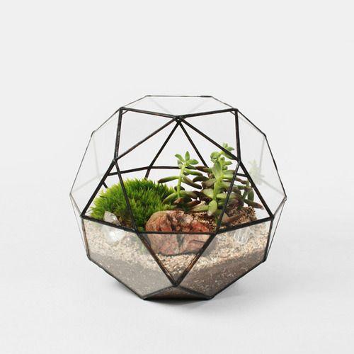 Geodesic Terrarium By Score Solder 250 Terrarium Polyhedron Glass Terrarium