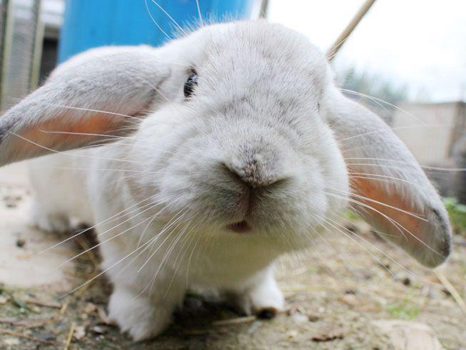 Rescue Rabbits Bunny Care Bunny Mom Bunny