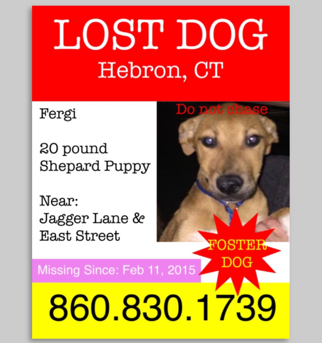 Reunited dog missing in Hebron, CT (With images) Losing