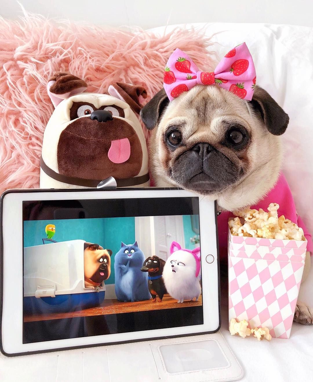 Watching The New Trailer Of The Secret Life Of Pets 2 I Can T Wait To See The Crazy Tricks Of My Favorite Character Mel Cute Pug Puppies Cute Pugs Pugs Funny