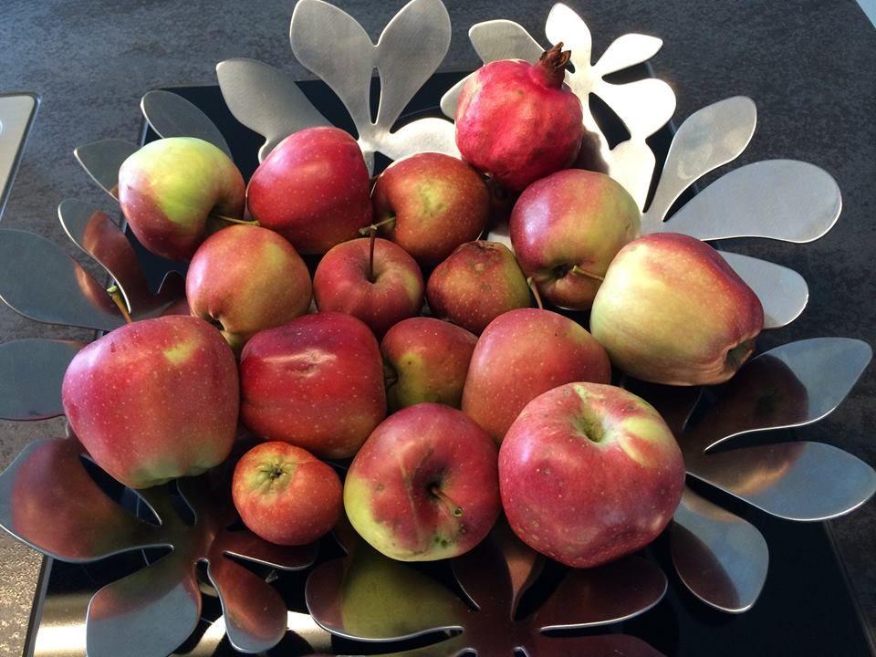Apfelmus: Der Liebling aus Kindertagen #Äpfelverwerten
