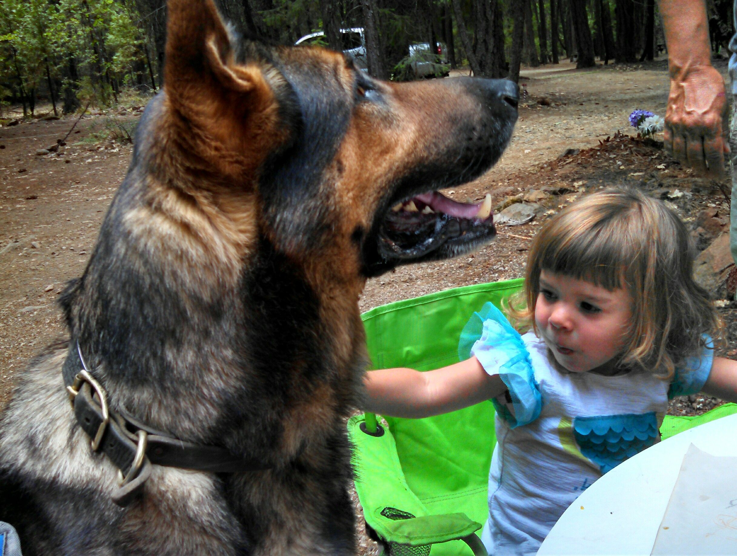 Socialization it's a buzzword in the dog world. But what