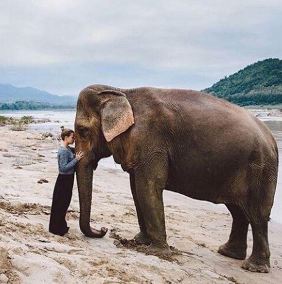 "all thai made on Twitter: ""Is all about Love #LoveElephants https://t.co/9mTG8JGKHF https://t.co/mqvHSEEEJz"""