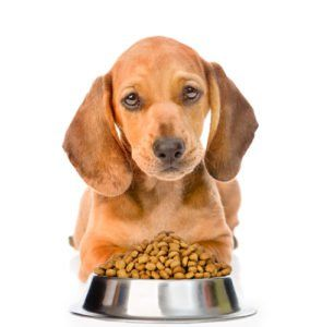 9 Vet Foods for Dachshunds Dog food recipes