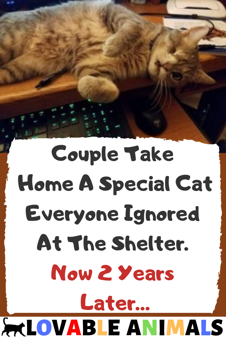 Couple Take Home A Special Cat Everyone Ignored At The Shelter Now 2 Years Later Cats Baby Cats Cat Care