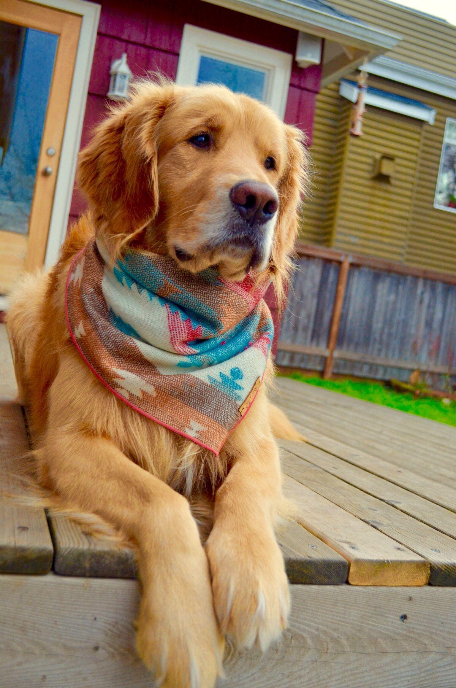 Golden Retriever Golden Retriever Puppy Golden Retriever Dog
