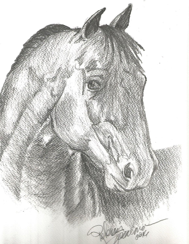 horse horse drawing horse print horse pencil drawing drawing