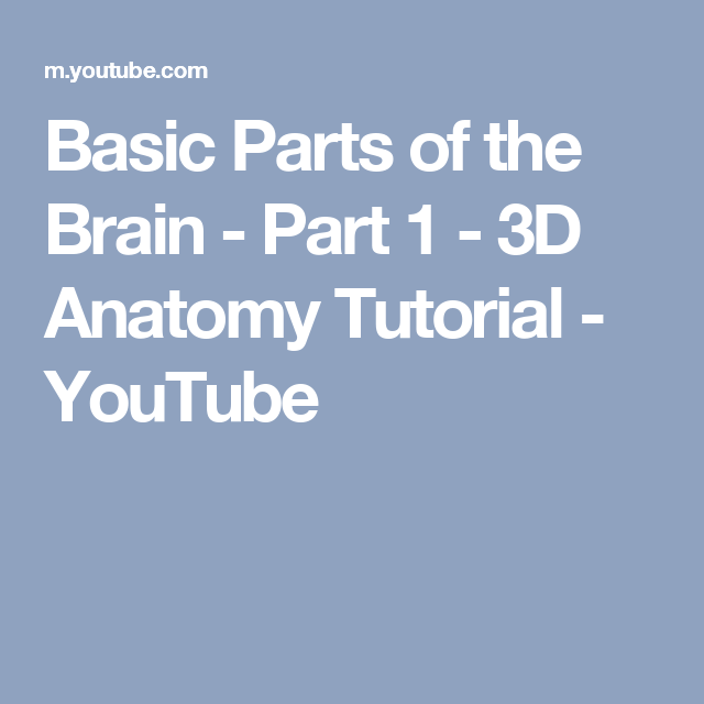 Basic Parts Of The Brain Part 1 3d Anatomy Tutorial Youtube