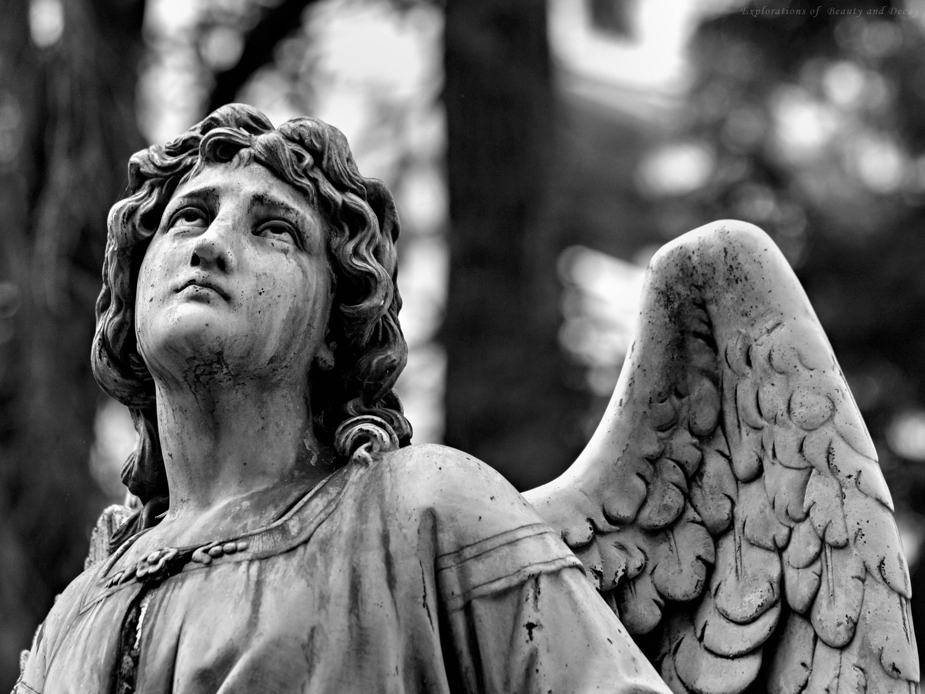 cemetery angels cemetery art cemetery statues weeping angels angel statues angels among us guardian angels graveyards google search