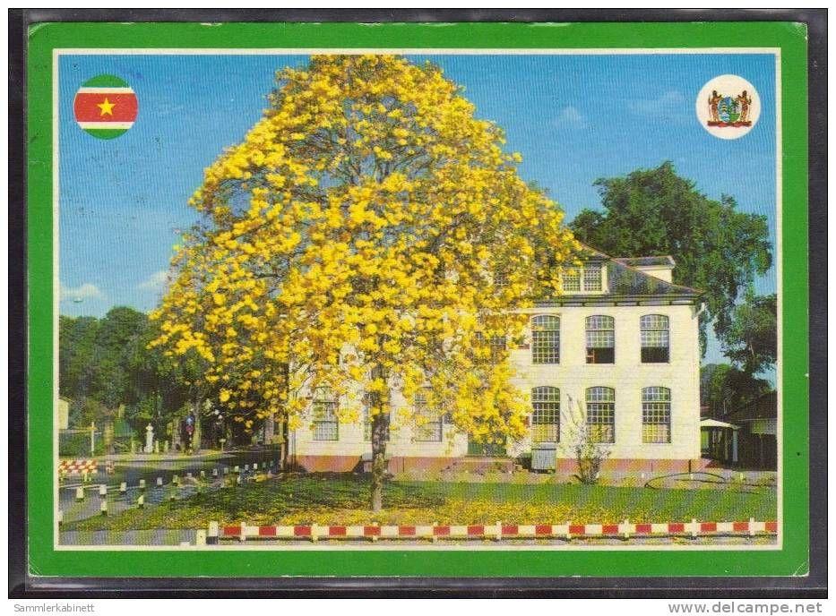 Paramaribo - Bloeinde Groenhart-boom met Min. Binnenlandse zaken