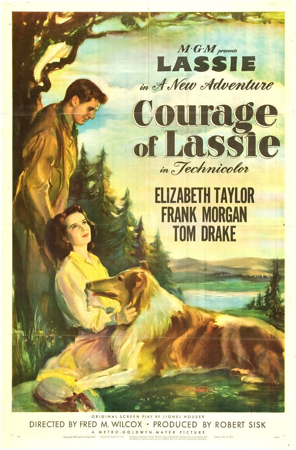 Courage of Lassie (#2 of 2): Extra Large Movie Poster Image - IMP ...