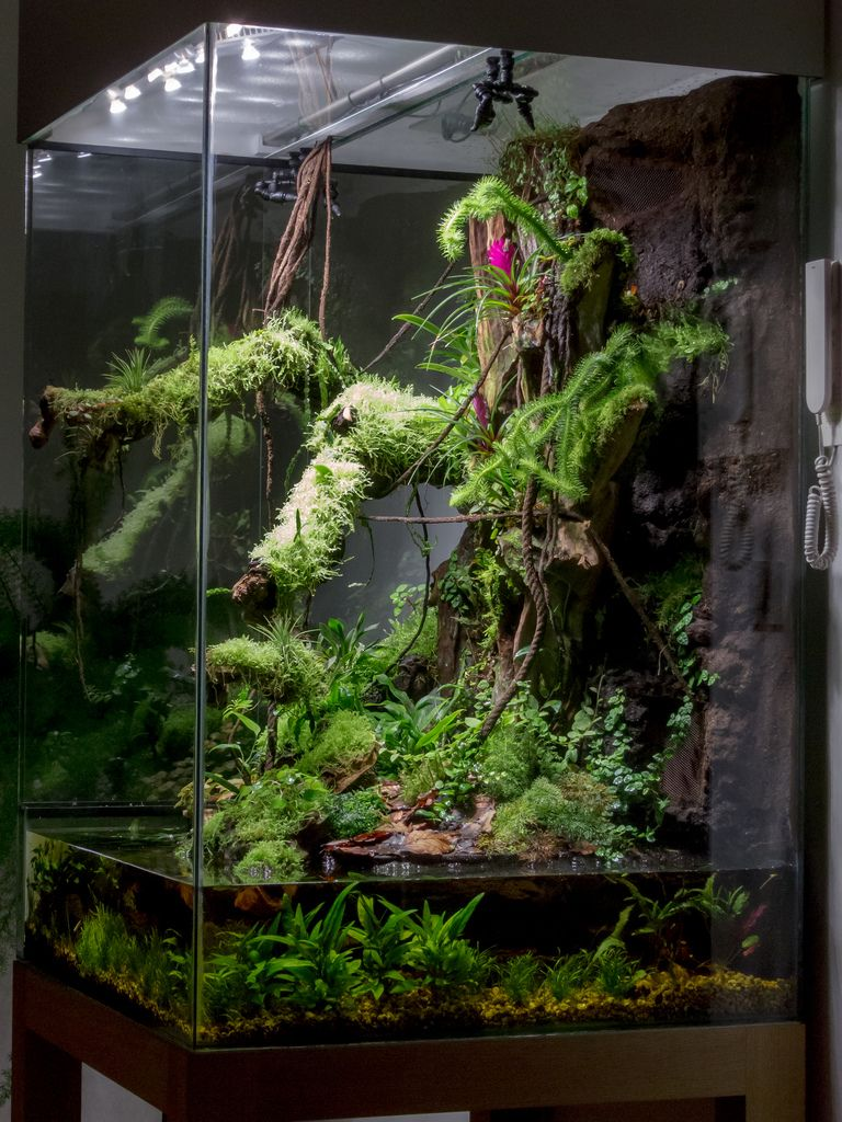 Click the image to open in full size paludarium pinterest