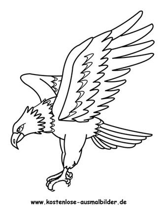Ausmalbilder Adler 252 Malvorlage Alle Ausmalbilder
