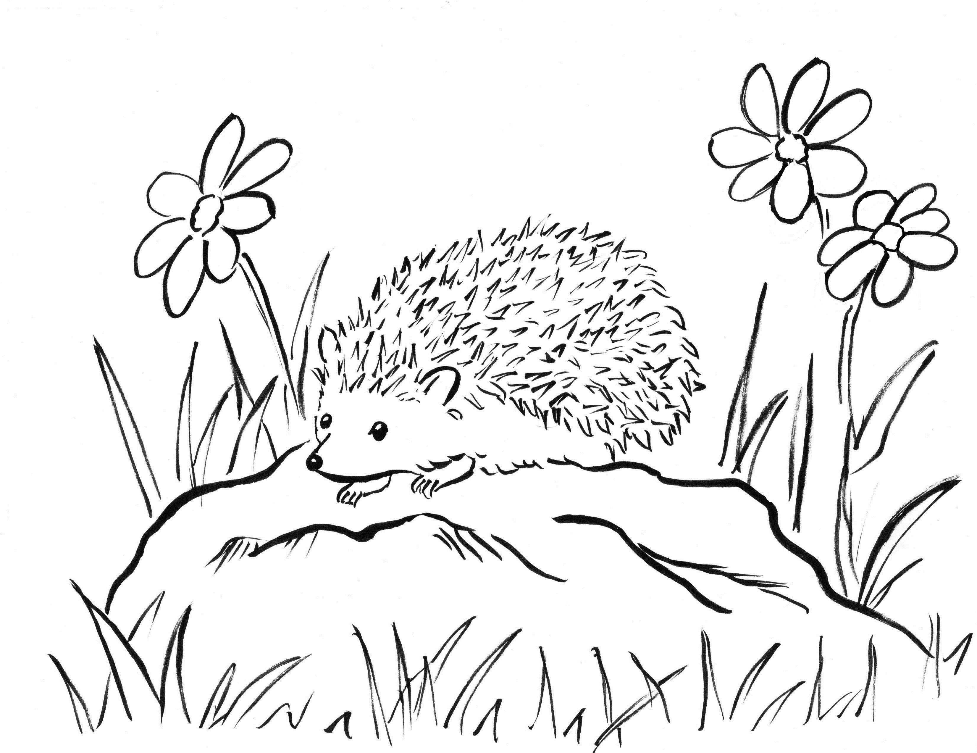 Hedgehog Coloring Sheet Hedgehog Drawing Hedgehog Colors Hedgehog Illustration
