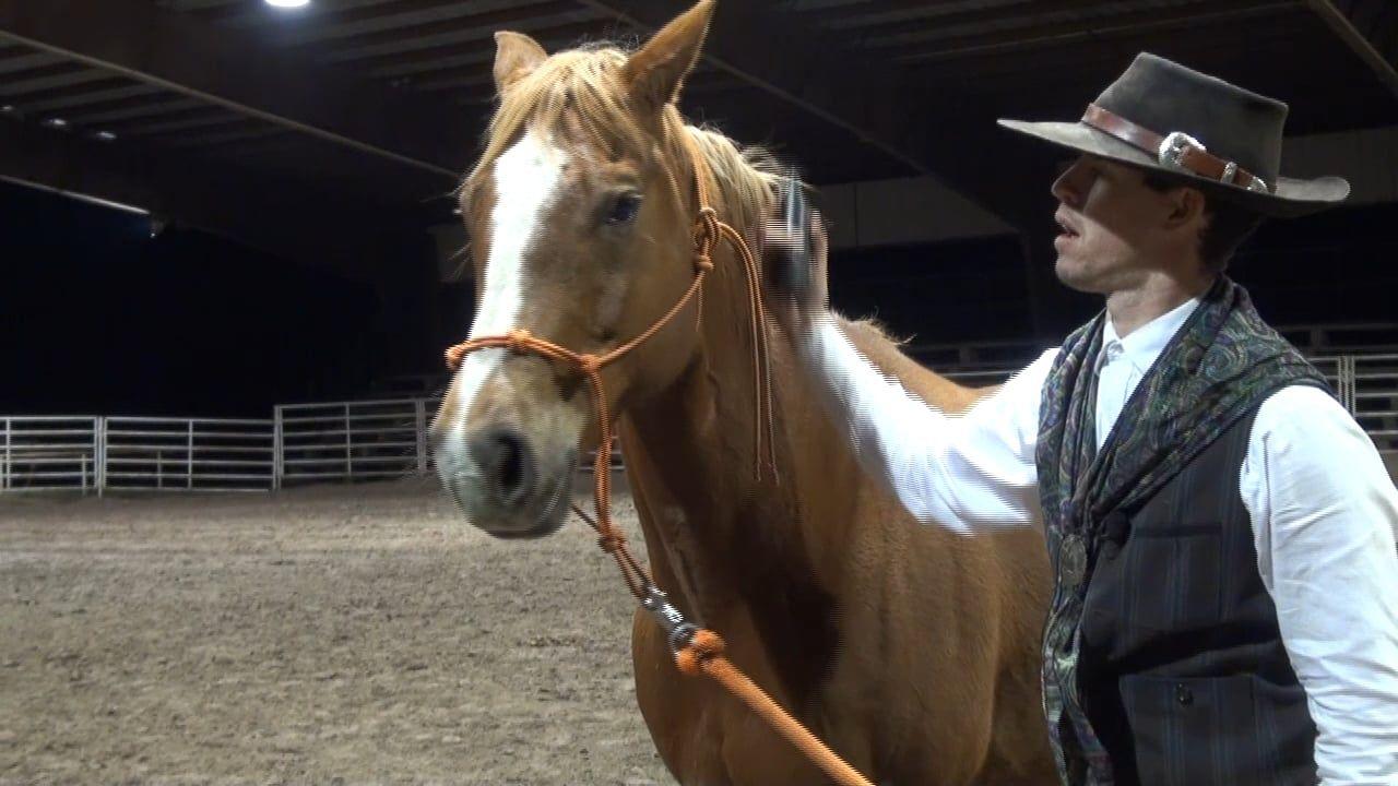 Head shy horse horses pretty horses carson james