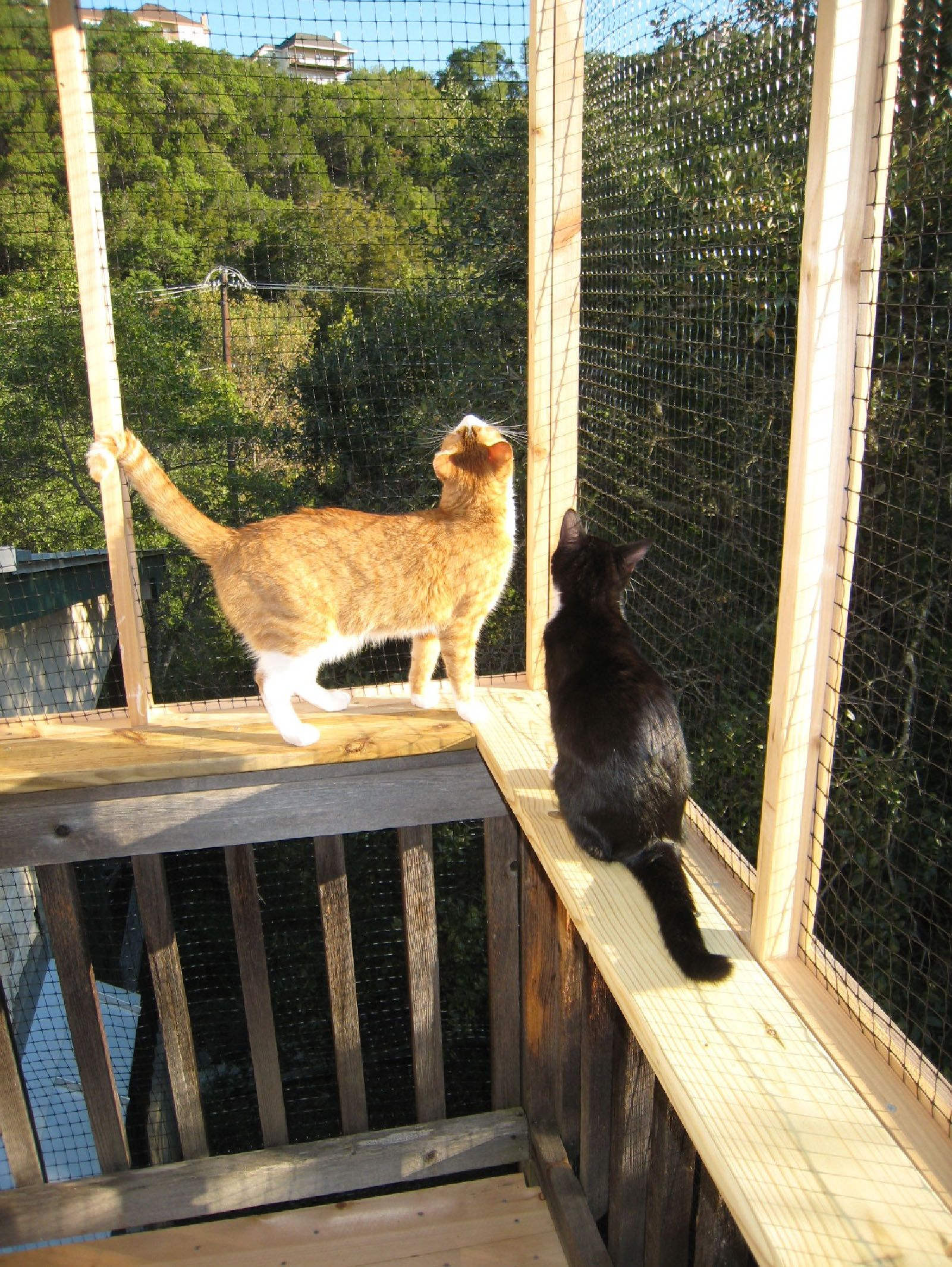 every cat should have a treehouse #blossomsworld #shadowcats #cats ... - Cat Patio Ideas