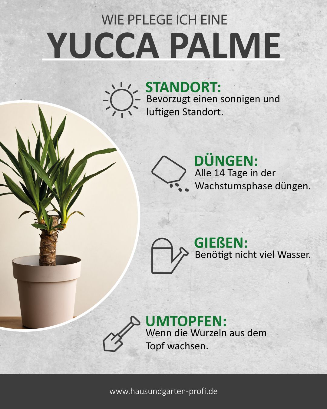 Pflegeleichte Yucca Palme In 2020 Yucca Palme Pflanzen Pflege Pflanzen