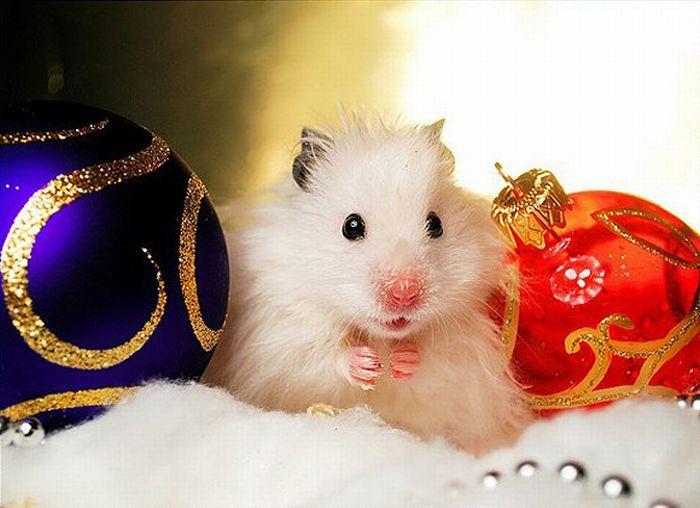 lustige tiere weihnachten httpslustigeausmalbilderco