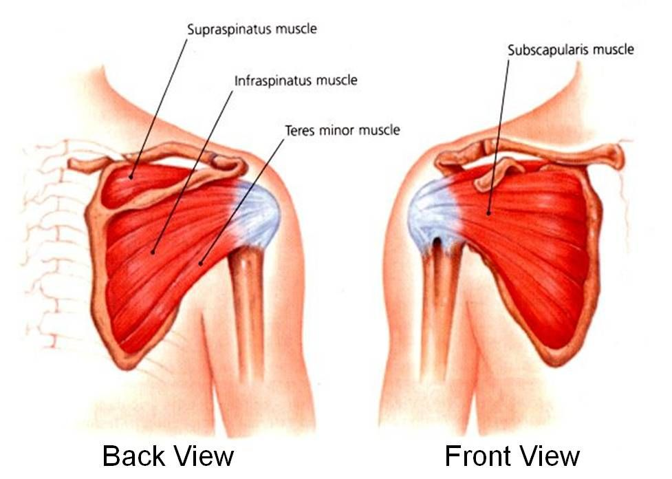 Shoulder Exercise for Rotator Cuff Tear | Rotator cuff exercises ...