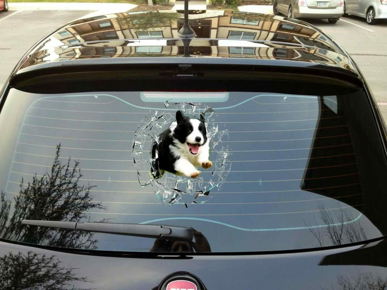 Border Collie Sticker For Car Looks About Right Border Collie Humor Border Collie Puppies Collie Puppies
