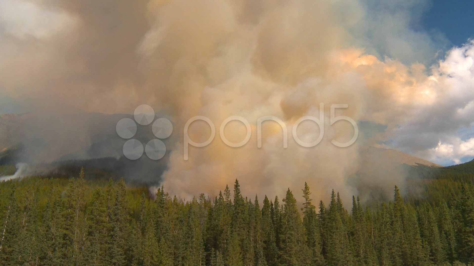 Forest fire along mountain side heavy smoke rising above forest Stock Footage sideheavyForestmountain