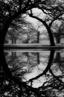 *trees and water