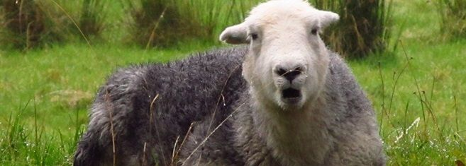 I just want to be a sheep.  VERY GOOD READ!