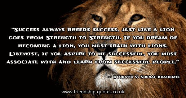 Success always breeds success, just like a lion goes from Strength to Strength. If you dream of becoming a lion, you must train with lions. Likewise, if you aspire to be successful, you must associate with and learn from successful people.. Image created on www.friendship-quotes.co.uk