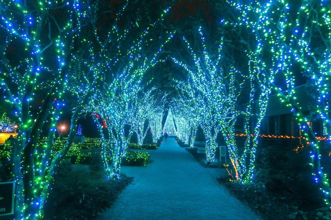 Holiday Lights At Atlanta Botanical Gardens Atlanta Botanical Garden Botanical Gardens Holiday Lights