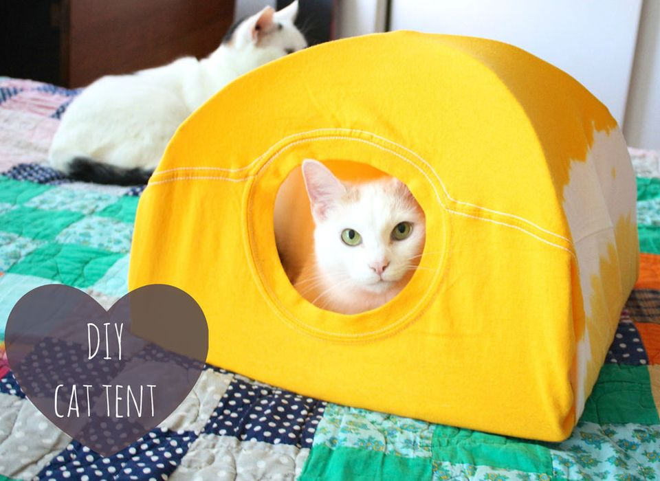 Los accesorios para gatos o para perros peque os son for Cuanto peso aguanta un cuelga facil