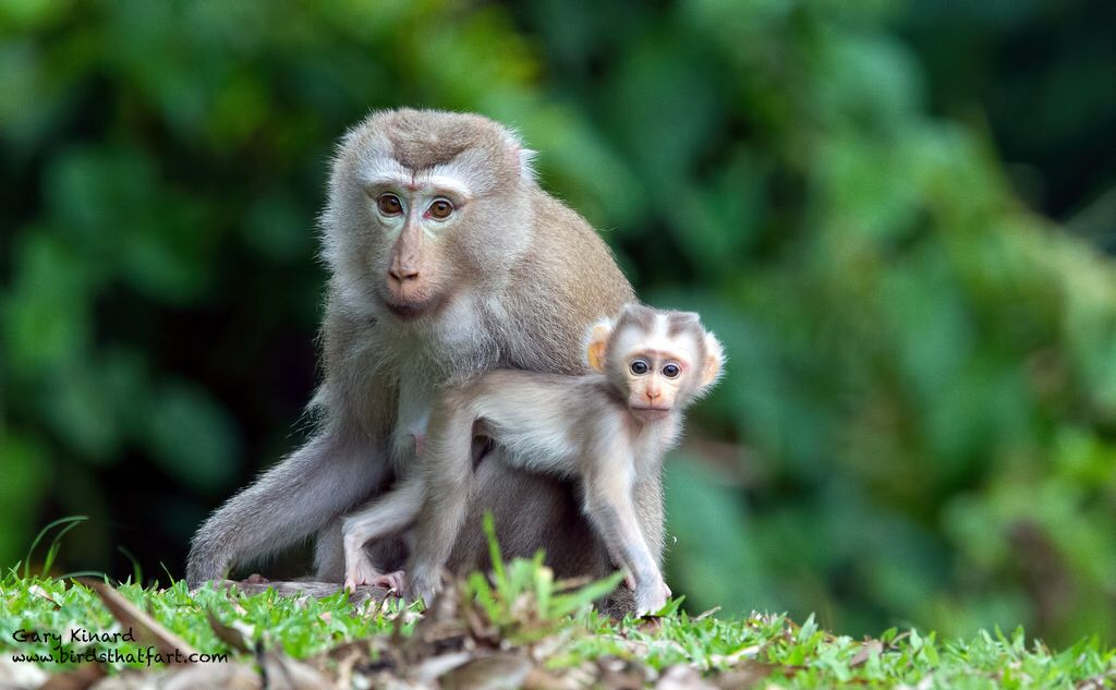 Pin on Love monkeys